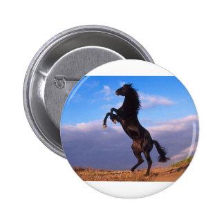 Black Stallion Horse Pinback Button