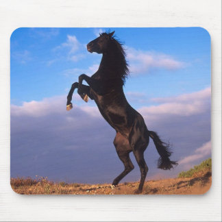 Black Stallion Mouse Pad