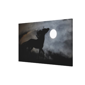 Black Stallion Night Silhouette Canvas Print