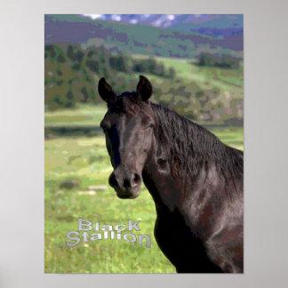 Black-Stallion poster