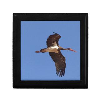 Black stork (Ciconia nigra) in flight Gift Box