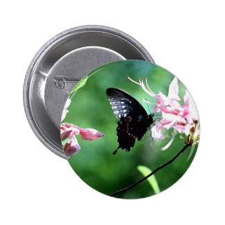 Black Swallowtail (2) Pinback Buttons