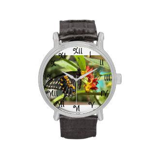 Black Swallowtail Butterfly #2-watch
