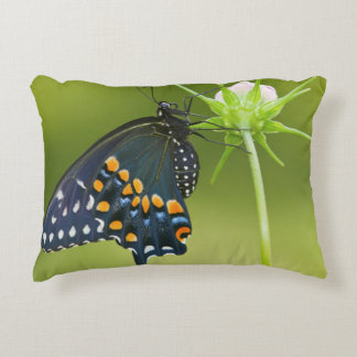 Black Swallowtail butterfly Accent Cushion