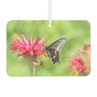 Black swallowtail butterfly and red bee balm