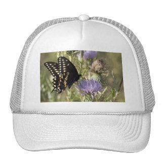 Black Swallowtail Butterfly Baseball Hat