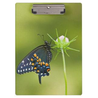 Black Swallowtail butterfly Clipboard