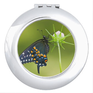 Black Swallowtail butterfly Compact Mirrors