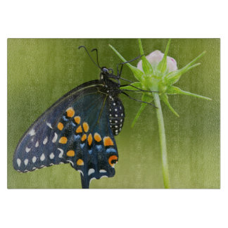 Black Swallowtail butterfly Cutting Board