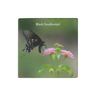 Black Swallowtail Butterfly Stone Magnet