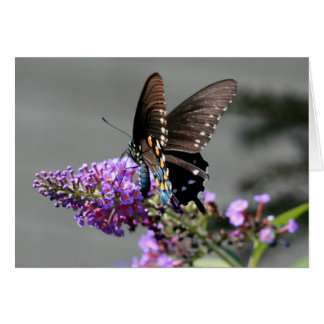 Black Swallowtail Butterfly Greeting Card