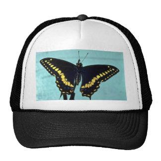 Black swallowtail butterfly mesh hat