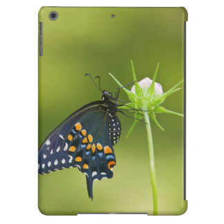 Black Swallowtail butterfly iPad Air Cases