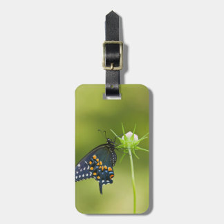 Black Swallowtail butterfly Luggage Tags