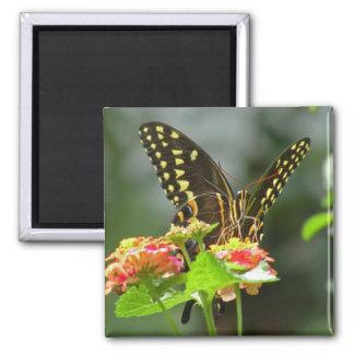 Black Swallowtail Butterfly Magnet