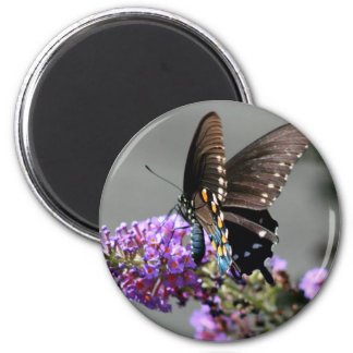 Black Swallowtail Butterfly 6 Cm Round Magnet