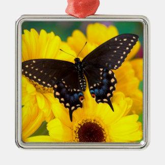 Black Swallowtail butterfly Metal Ornament