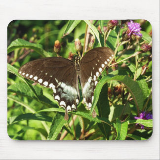 Black Swallowtail Butterfly Mouse Pads