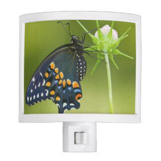 Black Swallowtail butterfly Night Lites