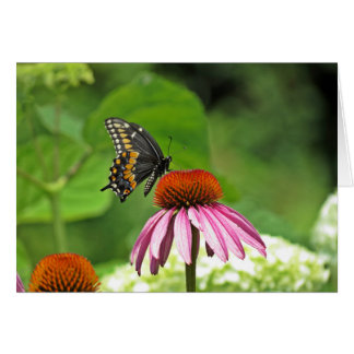 Black Swallowtail Butterfly Note Card
