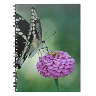 Black Swallowtail Butterfly on a Pink Flower Notebook