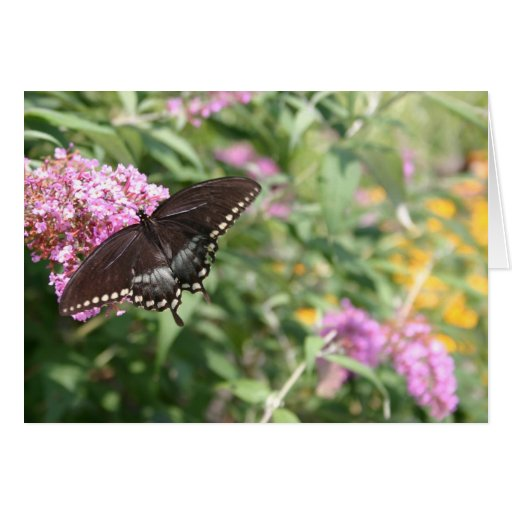 Black Swallowtail Butterfly on Butterfly Bush Greeting Card