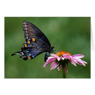 Black Swallowtail Butterfly on Coneflower Greeting Card