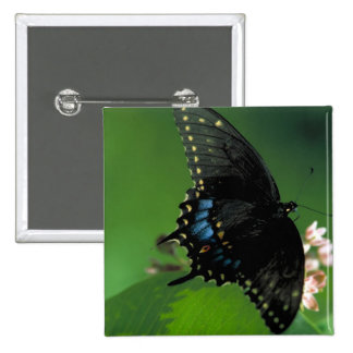 Black SwallowTail Butterfly on Flower Buttons