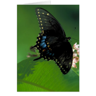 Black SwallowTail Butterfly on Flower Greeting Card