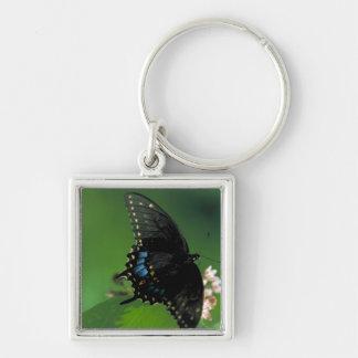 Black SwallowTail Butterfly on Flower Key Chain