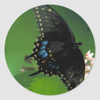 Black SwallowTail Butterfly on Flower Classic Round Sticker