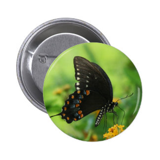 Black Swallowtail Butterfly on lantana Buttons