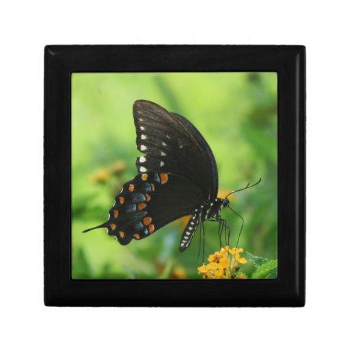 Black Swallowtail Butterfly on lantana Keepsake Box