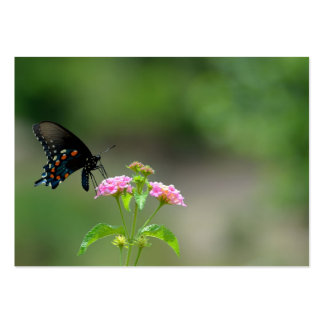 Black Swallowtail Butterfly Pack Of Chubby Business Cards