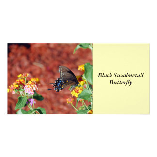 Black Swallowtail Butterfly Picture Card