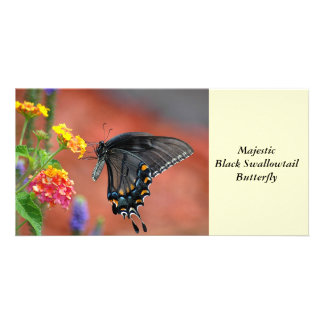 Black Swallowtail Butterfly Photo Cards