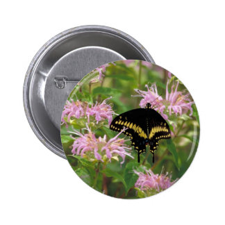 Black swallowtail butterfly photo pinback button
