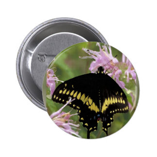 Black Swallowtail Butterfly Pinback Button