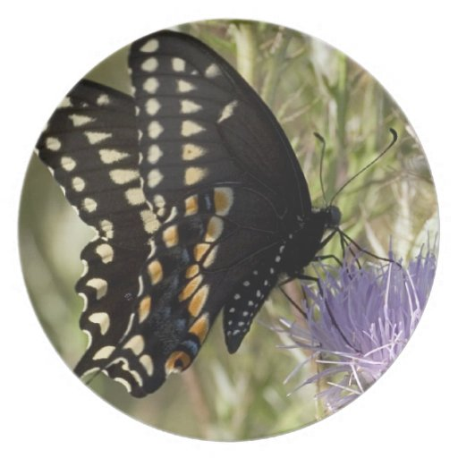 Black Swallowtail Butterfly Plate