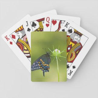 Black Swallowtail butterfly Poker Deck