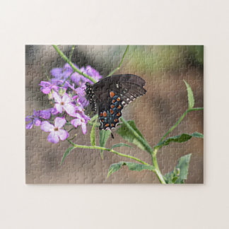 Black swallowtail butterfly puzzles