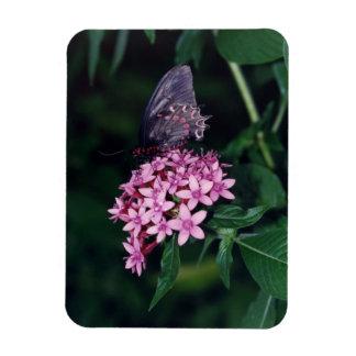 Black Swallowtail Butterfly Rectangular Photo Magnet