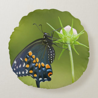 Black Swallowtail butterfly Round Cushion
