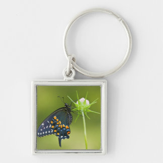 Black Swallowtail butterfly Silver-Colored Square Key Ring
