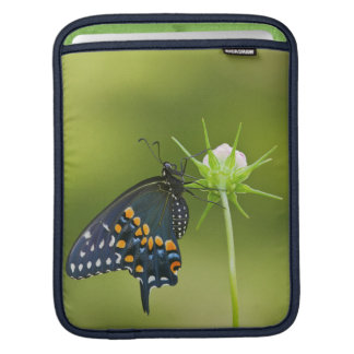 Black Swallowtail butterfly Sleeves For iPads