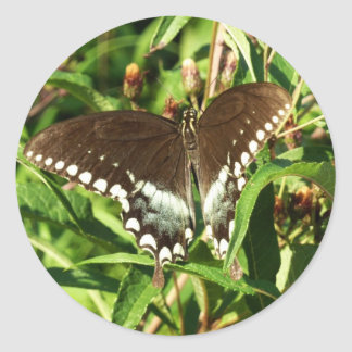 Black Swallowtail Butterfly Stickers