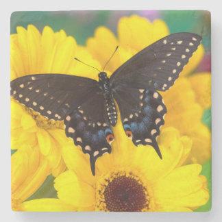Black Swallowtail butterfly Stone Coaster