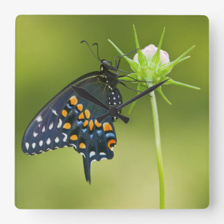 Black Swallowtail butterfly Wall Clocks