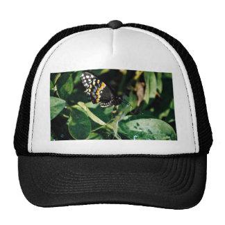 Black swallowtail butterfly, Wichita, Kansas, U.S. Mesh Hats