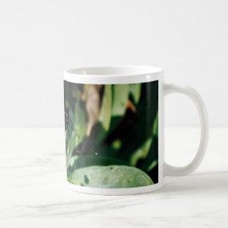 Black swallowtail butterfly, Wichita, Kansas, U.S. Coffee Mugs